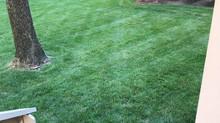 Quality West Carrollton lawn care