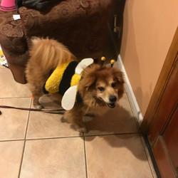 Brunswick - Bumblebee for Halloween