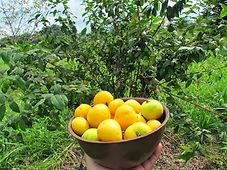OW_Fruit.jpg