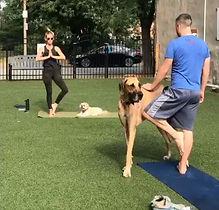 Dog yoga 4.JPG