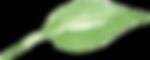 fresh green leaf.png