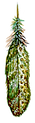 green spot feather.png