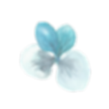hydragea small flower2.png
