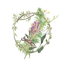 lavender herbs.png