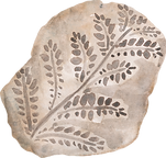 Fern Fossil.png