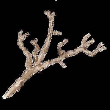 branch copy.png