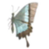 butterfly side.png