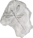 Dragonfly Fossil.png