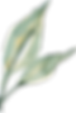 2 green sprig.png