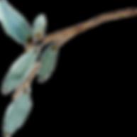 green sprig.png