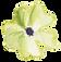White Poppy 1.png