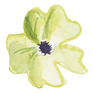 White Poppy 1.png