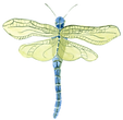 Dragonfly3 blue green.png