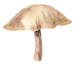 Fawn Mushroom.png