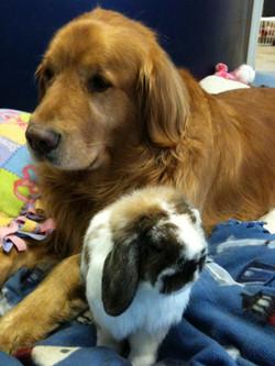 Jackson and his bunny Flopsy