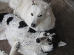 Miki & Sakari