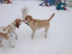 Gracie, Sophie and Sammy