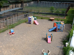 Our runs and day camp yard