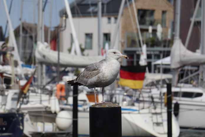 HEILIGENHAFEN - a seagull next to the boat