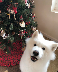 Sophie at Christmas