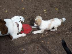 Angus & Cody