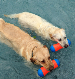 A swimming race