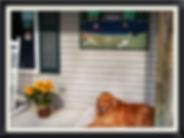 dog boarding rochester ny