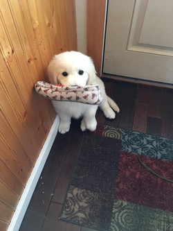 Is that your slipper?
