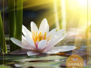 A lenda da Flor de Lótus e seus ensinamentos