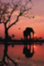 Elephant Poster.JPG