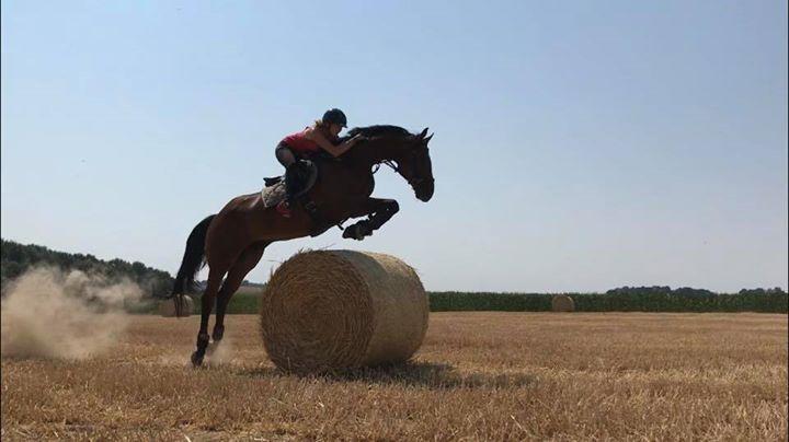 1 couple cheval/cavalier
