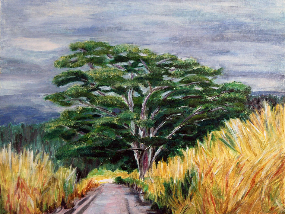 Upper Sugar Cane Road