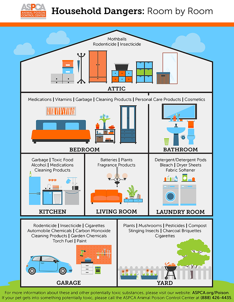 apcc-household-dangers-infographic_print