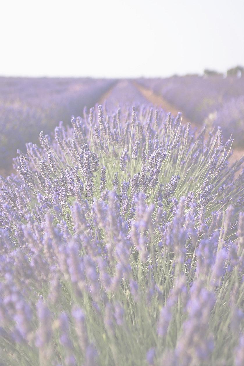 lavender-3605688_1920_edited.jpg