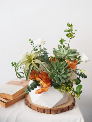 空鳳與多肉盆花—線上課程