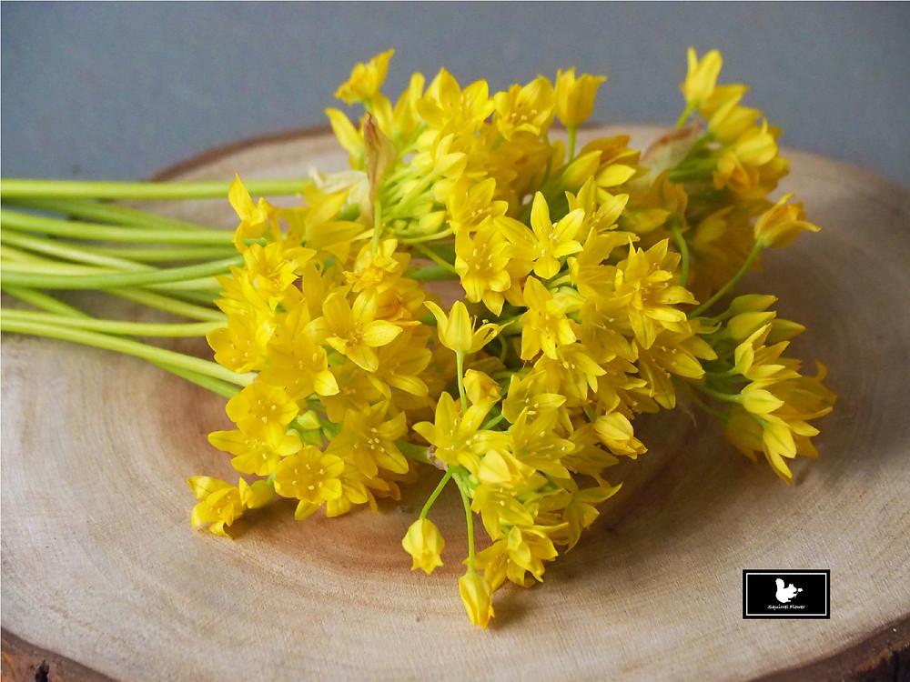 黃花茖蔥 Allium Moly