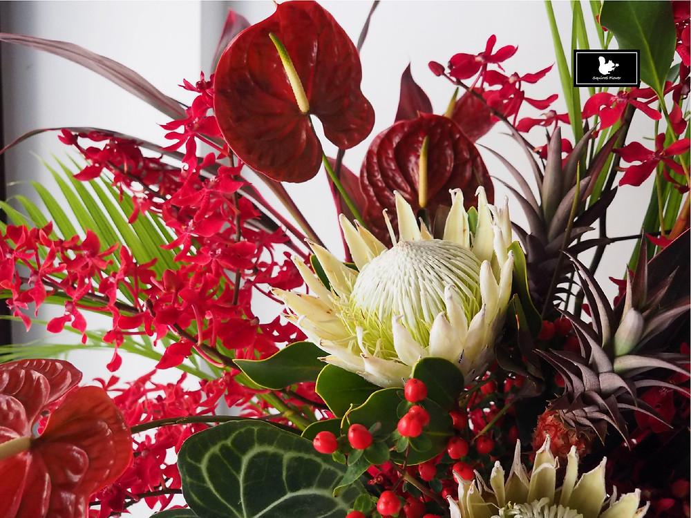 帝王花 Protea cynaroides