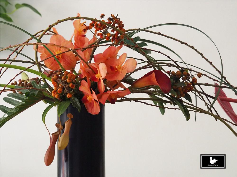萬代蘭盆花