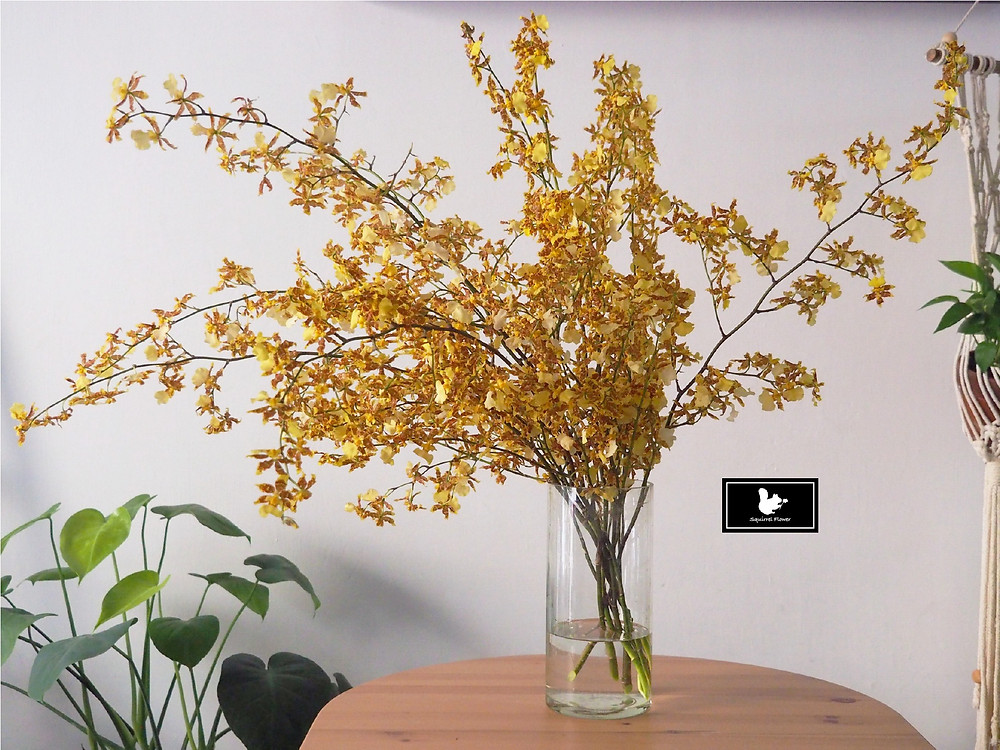 文心蘭 Oncidium flexuosum