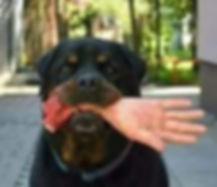 dog with hand.jpeg