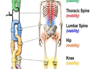 Flexibility, Stability, and Mobility