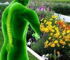 3 Tips to Avoid Back Pain from Yard Work