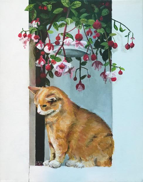 Cat on a windowsill
