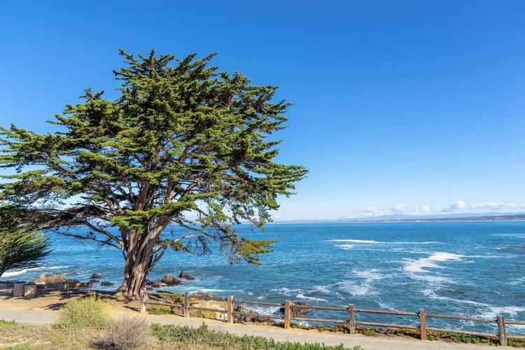Cruise to Monterey