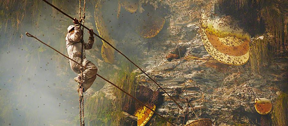 The Dangerous, Spiritual Work of Harvesting Mad Honey