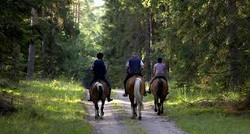 horse green way