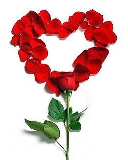 rose-1215314__480.jpg