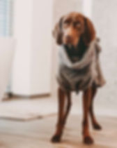 StoneGrey_Hundebademantel_Lills_grau_600