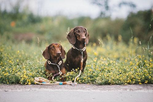 Koppelleine für 2 Hunde