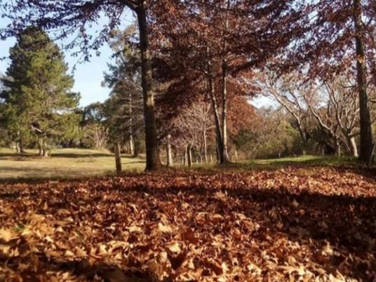 Entre Vírgulas: Folhas de Outono